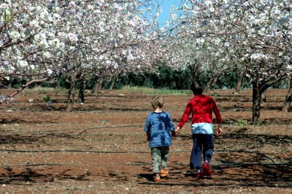 almond-brothers-Israel-plantation