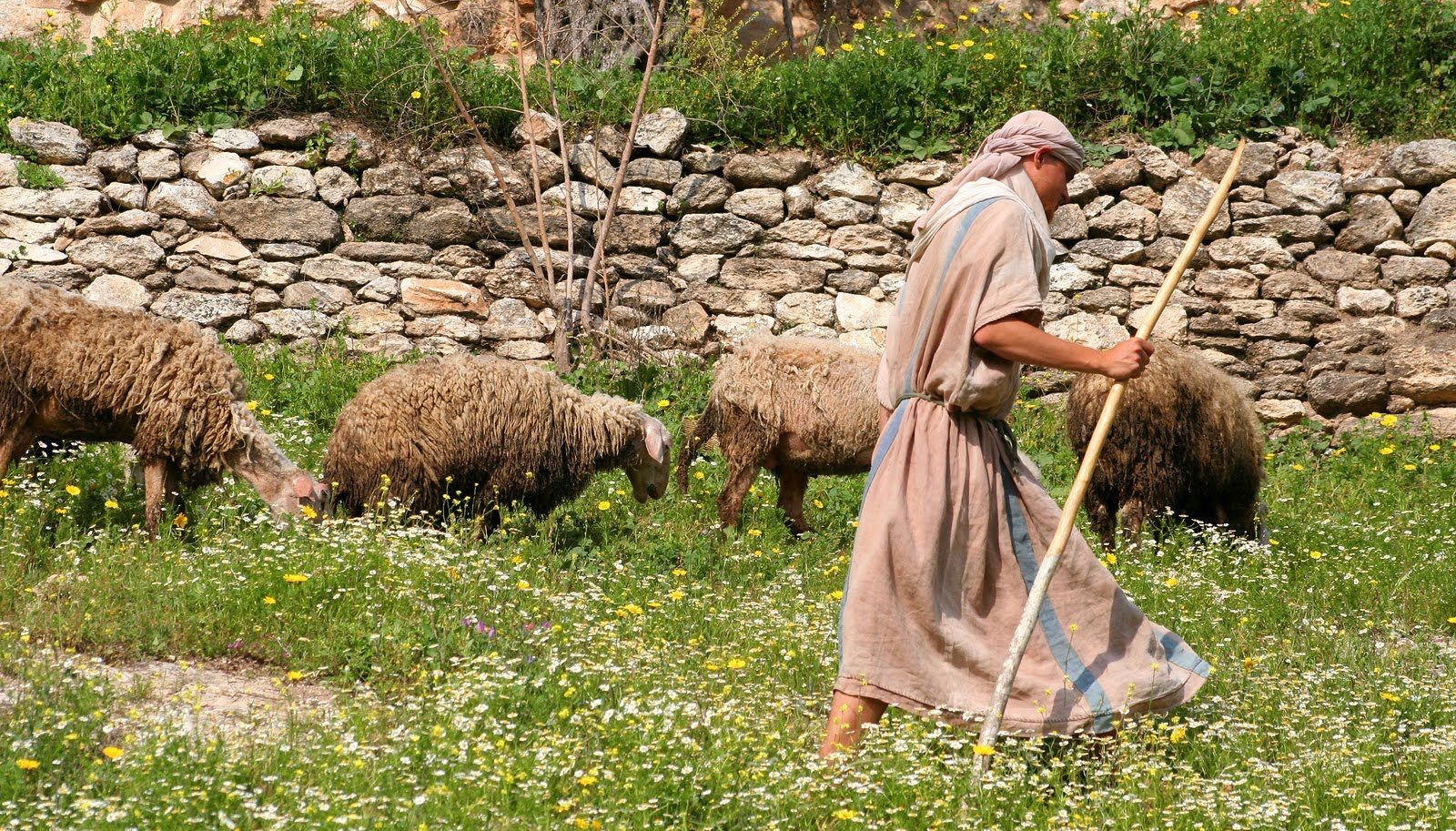Shepherd-sheep