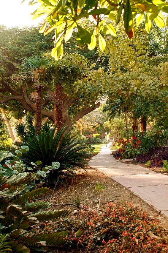 garden-Kibbutz-Botanic-Garden-Yehuda