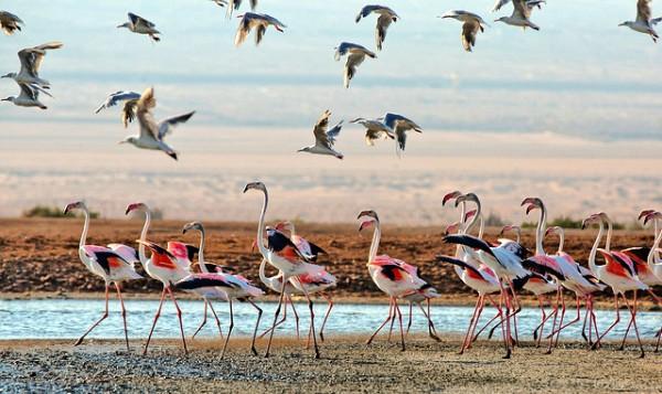 Negev Desert-water birds