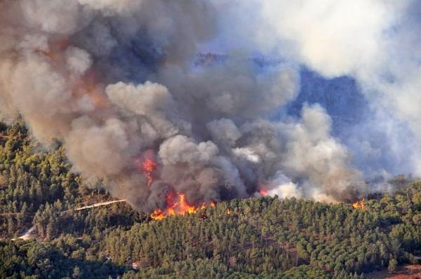Mount_Carmel_forest_fire