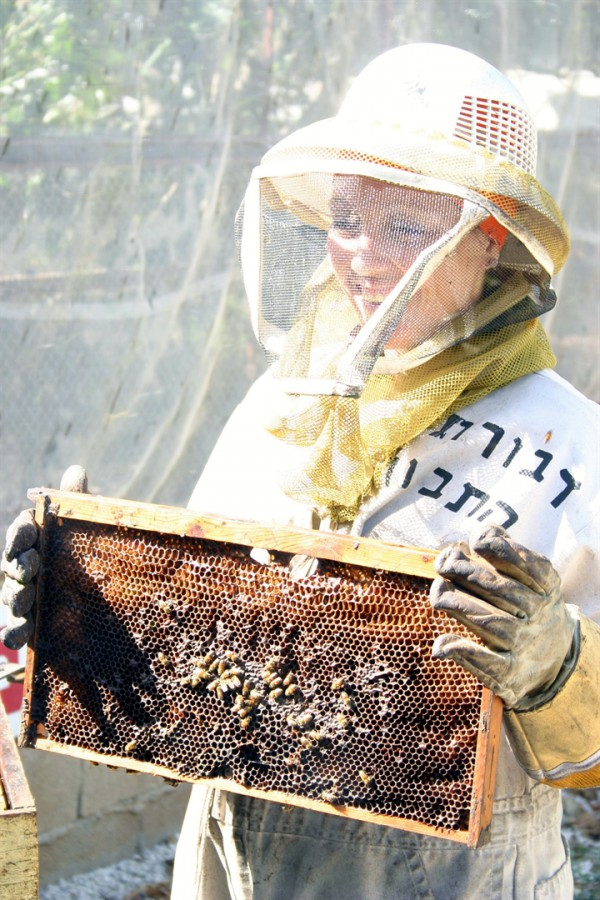 A visit to a honey farm in the Lower Galilee region of Israel. (Photo: Go Israel)