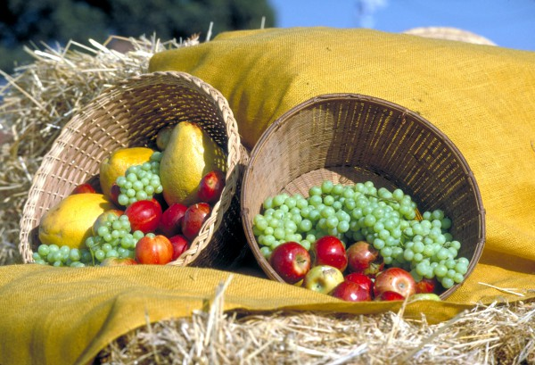 Baskets of fruit harvested in Israel (Photo: Go Israel)