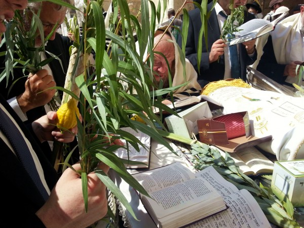 Willow-Kotel-Sukkot-Four-Species-Kotel-Lulav-Etrog