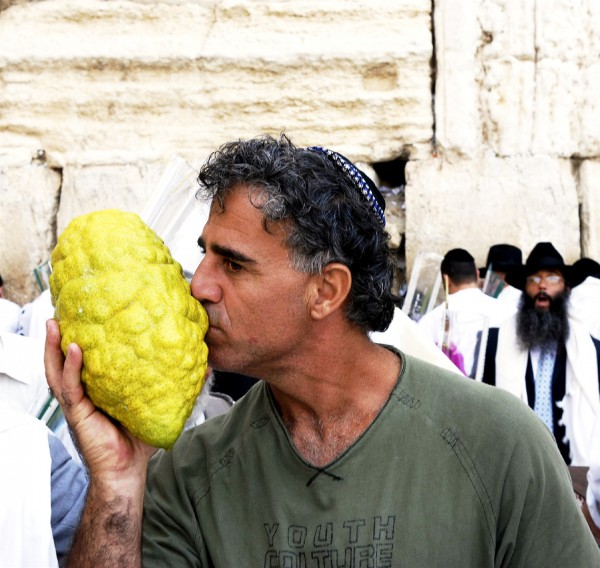 The etrog (citron), which is highly fragrant and represents the heart of the man who is pure and righteous, is used during the festival of Sukkot. The above etrog is very large. Typically, they are the size of an avocado or mango.