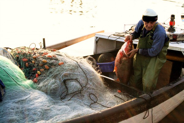 Kinneret fish-fisherman