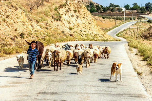 A Jordanian boy leads his flock. Although the Israelites first settled on the east side of the Jordan, in the 20th century, that land was allocated to the creation of an entirely new country called Transjordan (Jordan) by the League of Nations.
