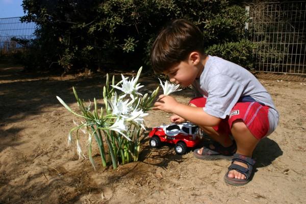 boy-Israel-flowers-toy-child-play