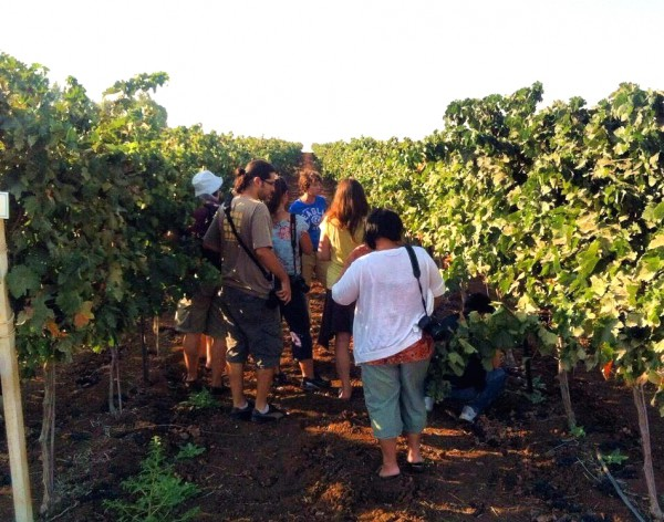 According to Israel Tourism, Israel has 25 commercial wineries and over 150 boutique wineries. Eighty-five percent of them were founded in the last decade. (Israel Tourism photo)