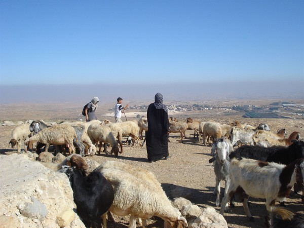 Israel-sheep-shepherd-flock