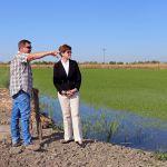 California rice growing, Israeli agitech, drip irrigation, California drought