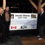 Jacob Sheep_Canada_Israel