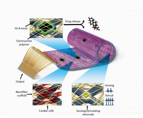 bionic heart patch-TAU-cardiac advances-Israel science and medicine